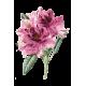 Huile essentielle Rhododendron Bio*