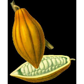 Beurre de Cacao Bio*