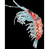 Huile de Krill en capsules (Euphausia superba)