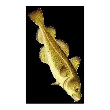 https://www.abcdelanature.com/2313-thickbox/huile-foie-de-morue-capsules.jpg
