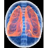 Bronches & Poumons mélange en poudre Régénère