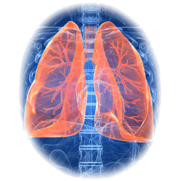 https://www.abcdelanature.com/2323-thickbox/bronches-poumons-melange-regenere.jpg