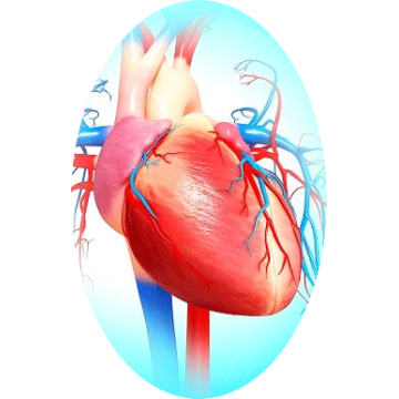 Cardiocool mélange en poudre