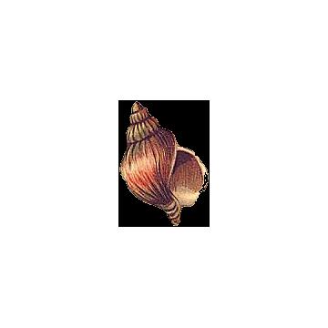 Cartipro+ marin mélange en gélules