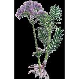 Mélange de plantes médicinales Emoticum (Nerfs)
