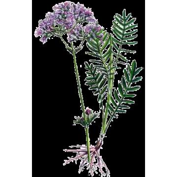 https://www.abcdelanature.com/2332-thickbox/emoticum-melange-plantes-medicinales.jpg