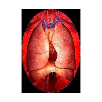 https://www.abcdelanature.com/2364-thickbox/pulmo-melange-plantes-medicinales.jpg