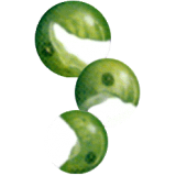 Chlorella en comprimés 505 mg. (Chlorella pyrenoidosa)