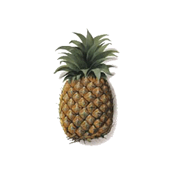 Ananas en gélules