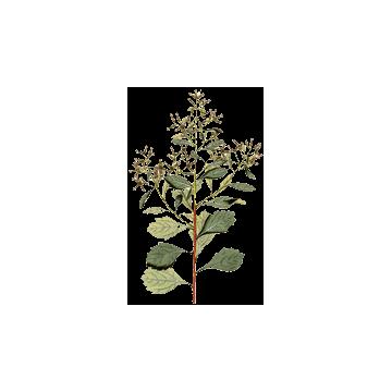https://www.abcdelanature.com/2415-thickbox/baccharis-plante-gelules.jpg