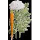Carotte Bio racine en gélules (Daucus carotta)