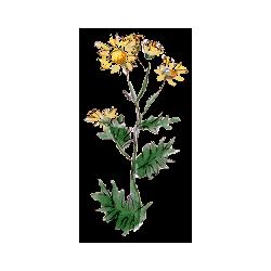 Chrysanthellum Americanum en gélules