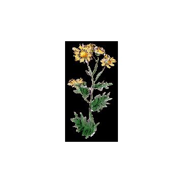 https://www.abcdelanature.com/2464-thickbox/chrysanthellum-americanum-gelules.jpg