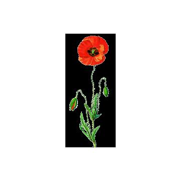 https://www.abcdelanature.com/2469-thickbox/coquelicot-fleurs-gelules.jpg