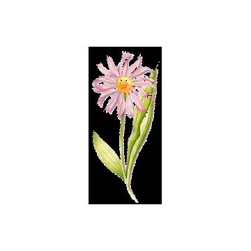 Echinacéa racine en gélules