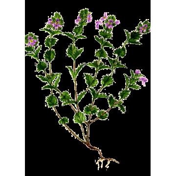 https://www.abcdelanature.com/2488-thickbox/euphraise-gelules.jpg