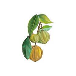 Garcinia extrait en gélules