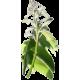 Griffonia L5-HTP en gélules
