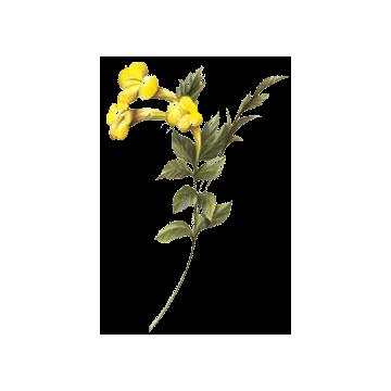 https://www.abcdelanature.com/2536-thickbox/lapacho-herboristerie-gelules.jpg
