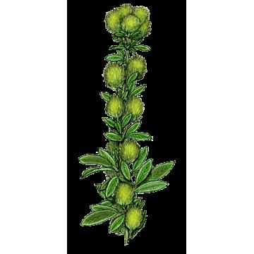 https://www.abcdelanature.com/2540-thickbox/lespedeza-gelules-herboristerie.jpg