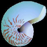 Magnesium marin Oligo-élément naturel en gélules