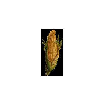 Maïs Barbe en gélules