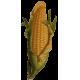 Maïs en gélules