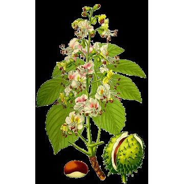 https://www.abcdelanature.com/2554-thickbox/marron-inde-bio-herboristerie.jpg