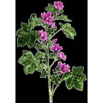 https://www.abcdelanature.com/2557-thickbox/mauve-fleurs-gelules-herboristerie.jpg