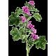 Mauve fleurs en gélules (Malva sylvestris)