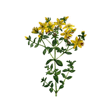 https://www.abcdelanature.com/2562-thickbox/millepertuis-bio-gelules-herboristerie.jpg