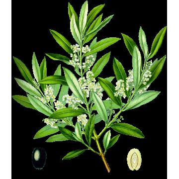 https://www.abcdelanature.com/2571-thickbox/olivier-bio-gelules-herboristerie.jpg