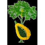 Mélange Papaye Magnésium en gélules pour cure minceur