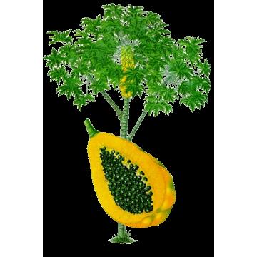 Papaye-Magnesium mélange en gélules