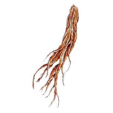 https://www.abcdelanature.com/2590-thickbox/pfaffia-paniculata-gelules-herboristerie.jpg