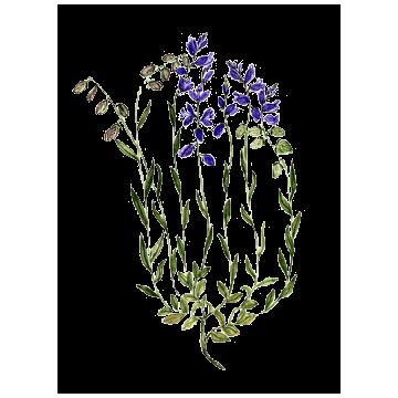 https://www.abcdelanature.com/2596-thickbox/polygala-gelules-herboristerie.jpg
