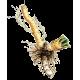 Raifort en gélules (Armoracia rusticana)