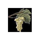 Marc de Raisin en gélules (Vitis vinifera)