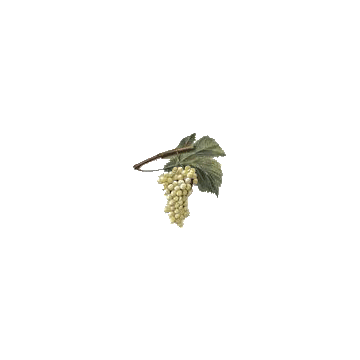 https://www.abcdelanature.com/2608-thickbox/raisins-marc-gelules-herboristerie.jpg