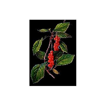 https://www.abcdelanature.com/2623-thickbox/schisandra-baie-gelules-herboristerie.jpg