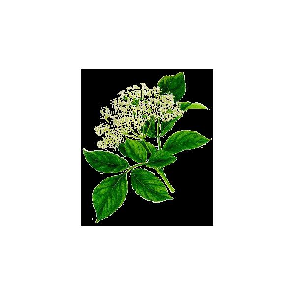 Sureau fleurs en g lules abc de la nature for Vente des fleurs en ligne