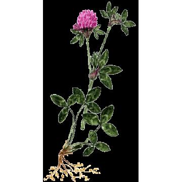 https://www.abcdelanature.com/2631-thickbox/trefle-rouge-gelules.jpg