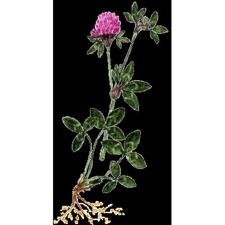 Trefle Rouge En Gelules Abc De La Nature Herboristerie En Ligne