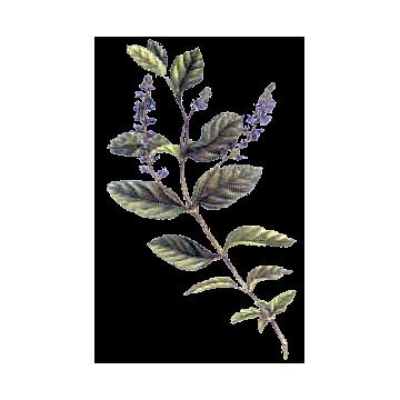 https://www.abcdelanature.com/2637-thickbox/veronique-gelules-herboristerie.jpg
