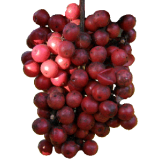 Huile essentielle Baies Roses de Madagascar Bio (Schinus terebenthifolius)