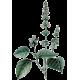 Huile essentielle Basilic Grand Vert Bio*