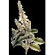 Huile essentielle Basilic Tropical bio (Ocimum basilicum L.)