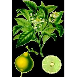 Huile essentielle Bergamote Bio*