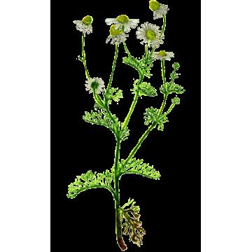 https://www.abcdelanature.com/2667-thickbox/huile-essentielle-camomille-sauvage-bio.jpg