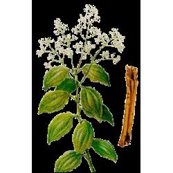 Huile essentielle Cannelle Ceylan écorce Bio*